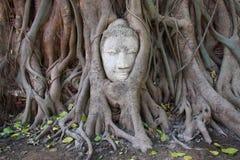 Buddha huvud i banyanträd rotar Arkivfoto