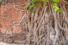 Buddha huvud i träd arkivbild