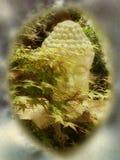 Buddha i skogen Arkivfoton