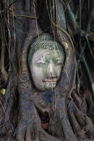 Buddha i trädet Arkivbilder