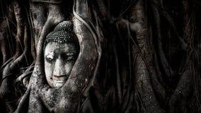 Buddha i trädet Royaltyfri Foto