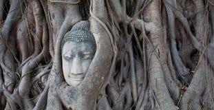 Buddha i trädet Arkivfoton