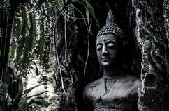 Buddha idol in old tree Royalty Free Stock Photo
