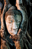 Buddha idoso Fotografia de Stock