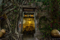 Buddha image and aged chapel which covered by Bo tree Stock Images