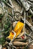 Buddha Image Ayudhya Thailand Royalty Free Stock Images