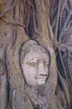 Buddha image covered with the roots Stock Photos