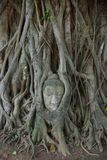 Buddha image head stuck in the tree2 Royalty Free Stock Photo