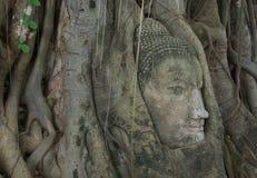 Buddha image head stuck in the tree3 Stock Photography