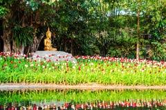 Buddha image under the bodhi tree Royalty Free Stock Image
