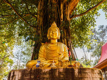 Buddha image under Bodhi tree Royalty Free Stock Photo