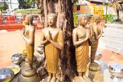 Buddha images under the tree Royalty Free Stock Photo