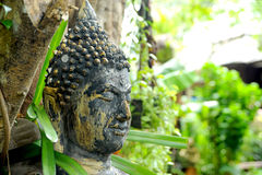 Buddha In Nature Royalty Free Stock Images