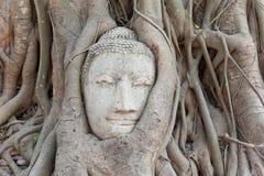 buddha kierowniczy korzeni piaskowa drzewo Obrazy Royalty Free