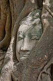 Buddha kierowniczy obramowany obrazy stock