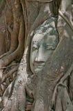 Buddha kierowniczy obramowany obraz royalty free