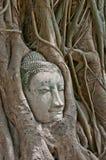 Buddha kierowniczy obramowany fotografia royalty free