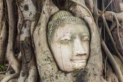 Buddha kierowniczy obramowany w drzewie zakorzenia przy świątynią Wat Mahatat mnie zdjęcie royalty free