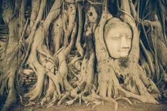 Buddha kierowniczy obramowany w drzewie zakorzenia przy świątynią Wat Mahatat mnie zdjęcia royalty free