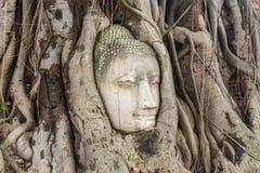 Buddha kierowniczy obramowany w drzewie zakorzenia przy świątynią Wat Mahatat mnie obraz stock