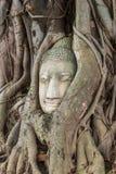 Buddha kierowniczy obramowany w drzewie zakorzenia przy świątynią Wat Mahatat mnie zdjęcia stock