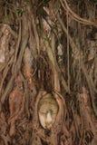 Buddha-Kopf in Ayutthaya Lizenzfreies Stockfoto