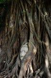 Buddha-Kopf bei Ayutthaya stockbild
