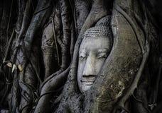 BUDDHA-KOPF-BILD IM STAMM Stockbild