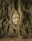 Buddha-Kopf in den Baum-Wurzeln Stockbilder