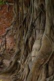 Buddha-Kopf in den Baum-Wurzeln Lizenzfreie Stockfotografie