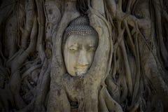 Buddha-Kopf in den Baumwurzeln stockbild