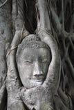 Buddha-Kopf in der Baumwurzel Stockfoto