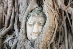Buddha-Kopf in einem Baum Stockbild