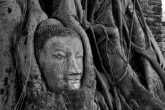Buddha-Kopf eingebettet im Banyanbaum stockbilder