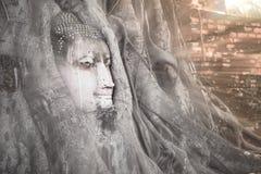 Buddha-Kopf hat oben im Baum mit Brachsenlicht gezeigt lizenzfreie stockfotos