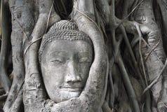 Buddha-Kopf im Baum, Thailand Stockfotos