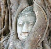 Buddha-Kopfbanyanbaum Lizenzfreies Stockbild