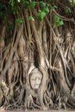 Buddha-Kopfstatue innerhalb bodhi Baums Lizenzfreies Stockfoto