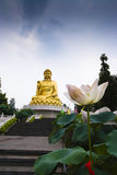 Buddha and Lotus Stock Image