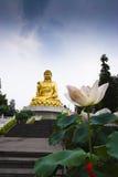Buddha and Lotus Stock Image
