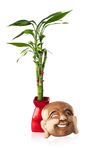 Buddha mask and Lucky bamboo. Isolated studio image of a lucky bamboo plant and a eastern Buddha wooden mask stock photos