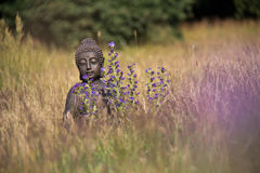 Buddha Meditation. Buddha statue meditating on a meadow royalty free stock photos