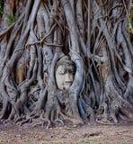 Buddha in mezzo delle radici Immagini Stock Libere da Diritti