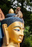 Buddha and Monkey Royalty Free Stock Photography
