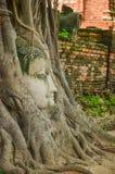 Buddha nell'albero Fotografie Stock