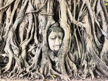 Buddha nell'albero Fotografia Stock