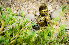 Buddha praying Royalty Free Stock Image