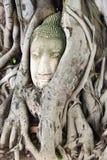 Buddha przewodzi piaska kamień w drzewnych korzeniach Ayuthya, Tajlandia (,) Obraz Royalty Free
