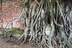 Buddha przewodzi piaska kamień w drzewnych korzeniach Ayuthya, Tajlandia (,) Zdjęcie Royalty Free