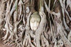 Buddha przewodzi piaska kamień w drzewnych korzeniach Ayuthya, Tajlandia (,) obrazy stock